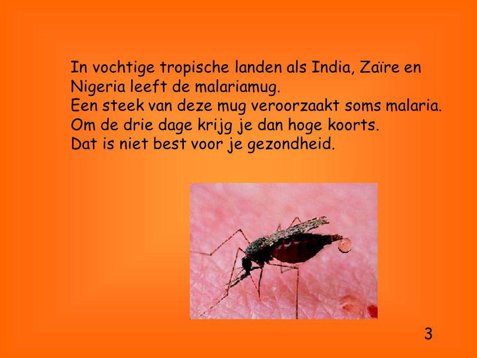 In vochtige tropische landen als India, Zaïre en Nigeria leeft de malariamug. Een steek van deze mug veroorzaakt soms malaria. Om de drie dage krijg je dan hoge koorts. Dat is niet best voor je gezondheid.
