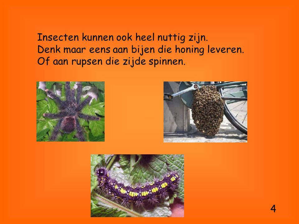 Insecten kunnen ook heel nuttig zijn