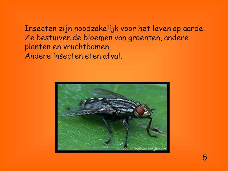 Insecten zijn noodzakelijk voor het leven op aarde