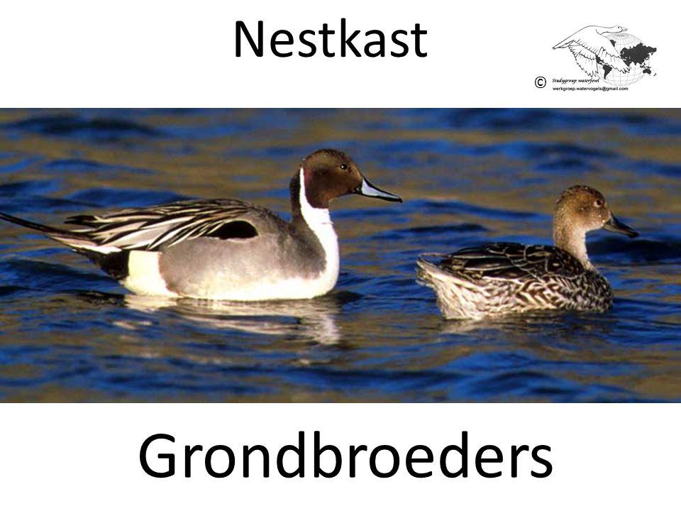 Nestkast © Grondbroeders