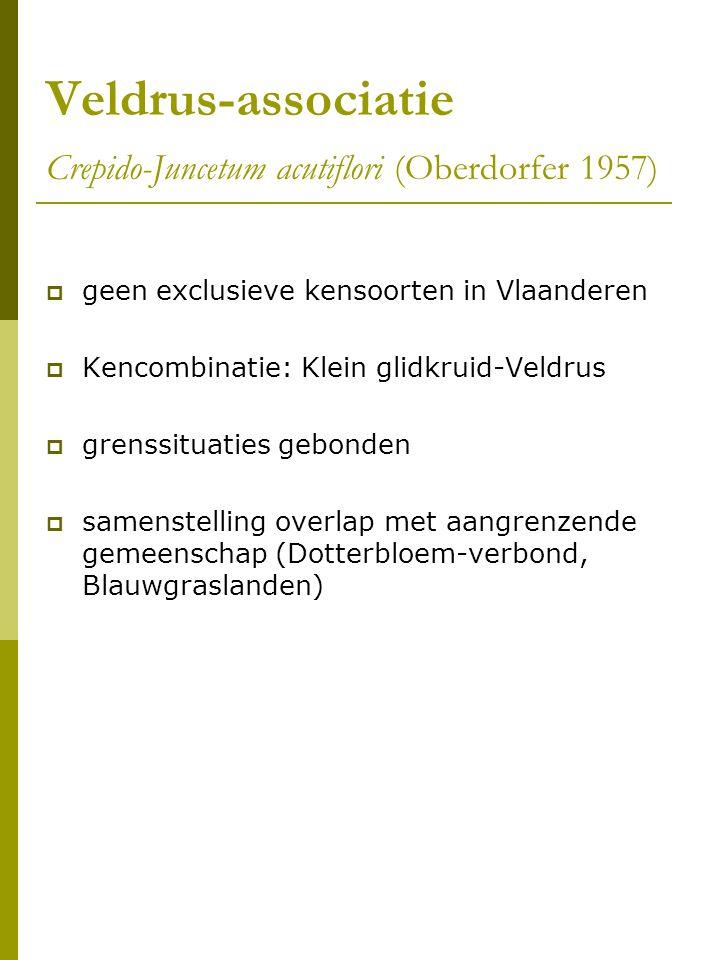 Veldrus-associatie Crepido-Juncetum acutiflori (Oberdorfer 1957)