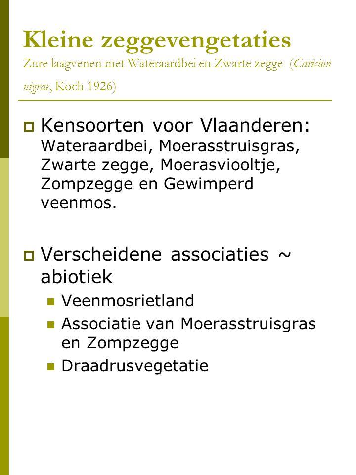 Kleine zeggevengetaties Zure laagvenen met Wateraardbei en Zwarte zegge (Caricion nigrae, Koch 1926)