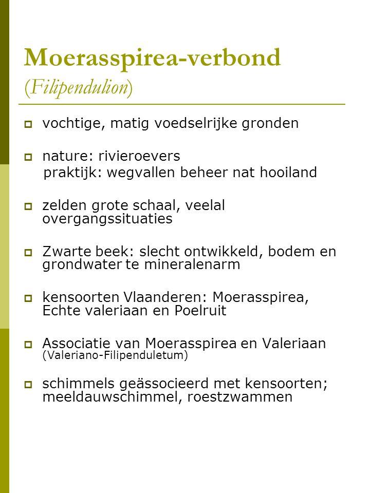Moerasspirea-verbond (Filipendulion)