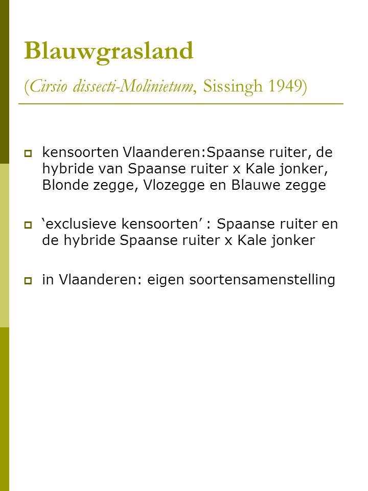 Blauwgrasland (Cirsio dissecti-Molinietum, Sissingh 1949)