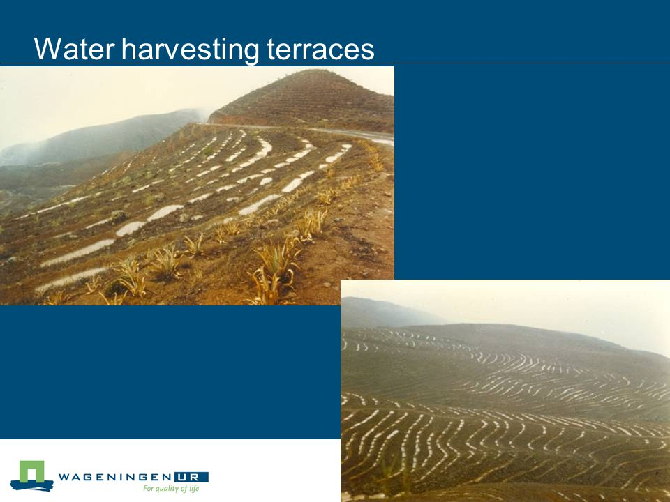 Water harvesting terraces
