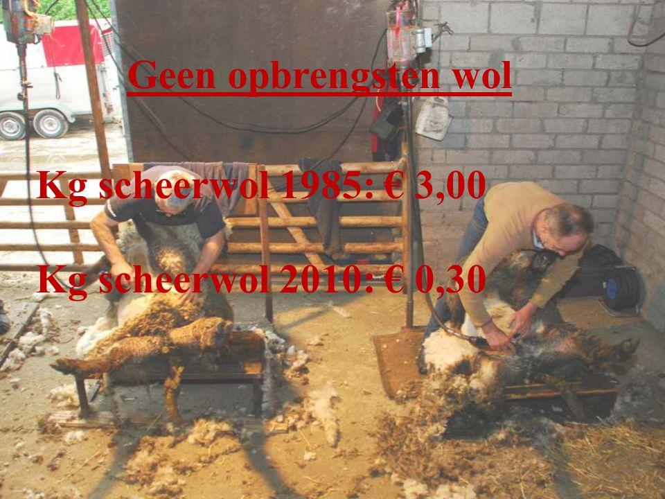 Geen opbrengsten wol Kg scheerwol 1985: € 3,00 Kg scheerwol 2010: € 0,30