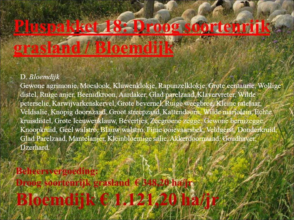 Pluspakket 18: Droog soortenrijk grasland / Bloemdijk