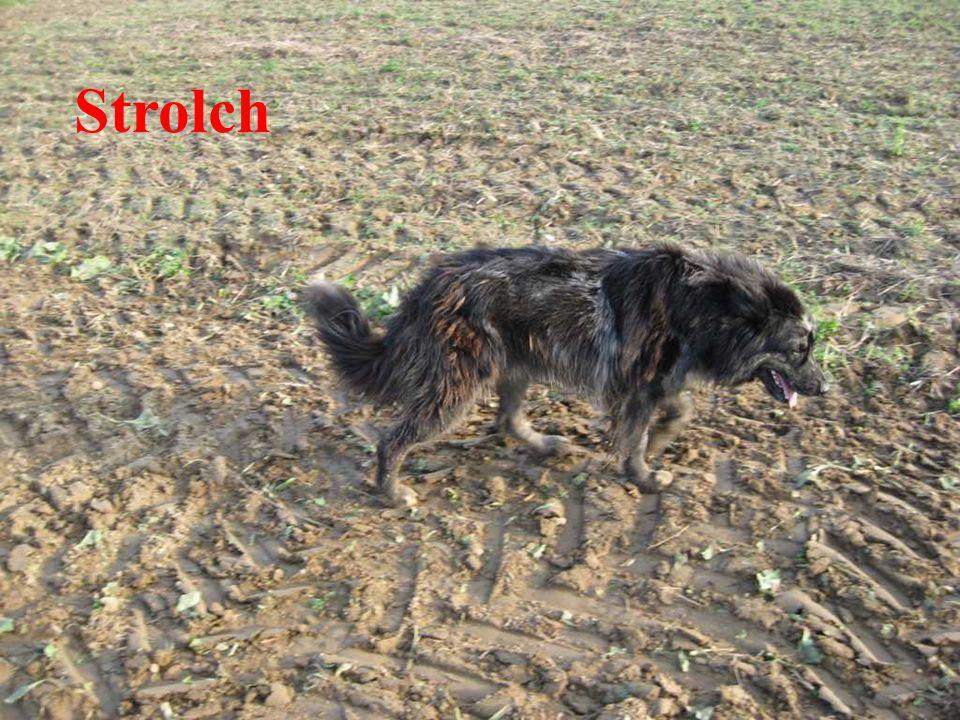 Strolch