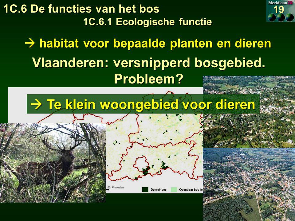 Vlaanderen: versnipperd bosgebied. Probleem