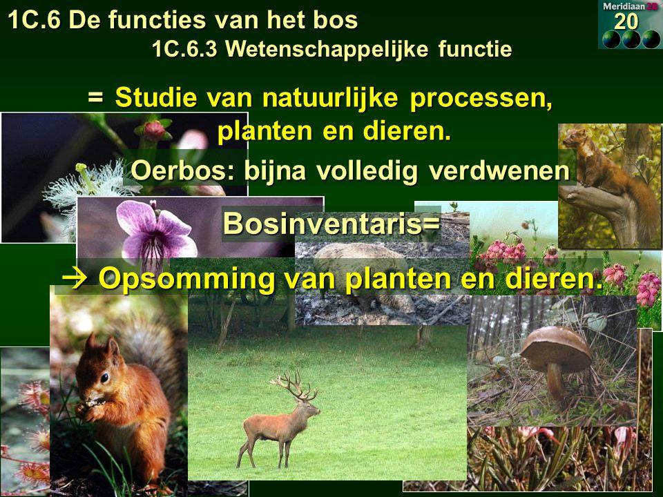 Bosinventaris=  Opsomming van planten en dieren.