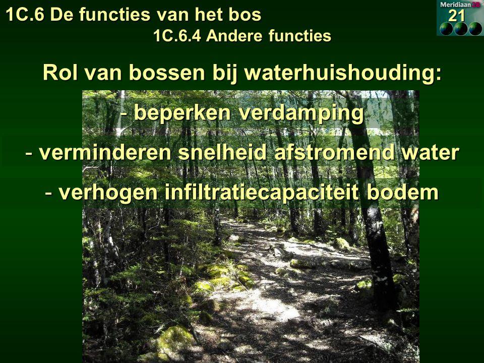Rol van bossen bij waterhuishouding: beperken verdamping