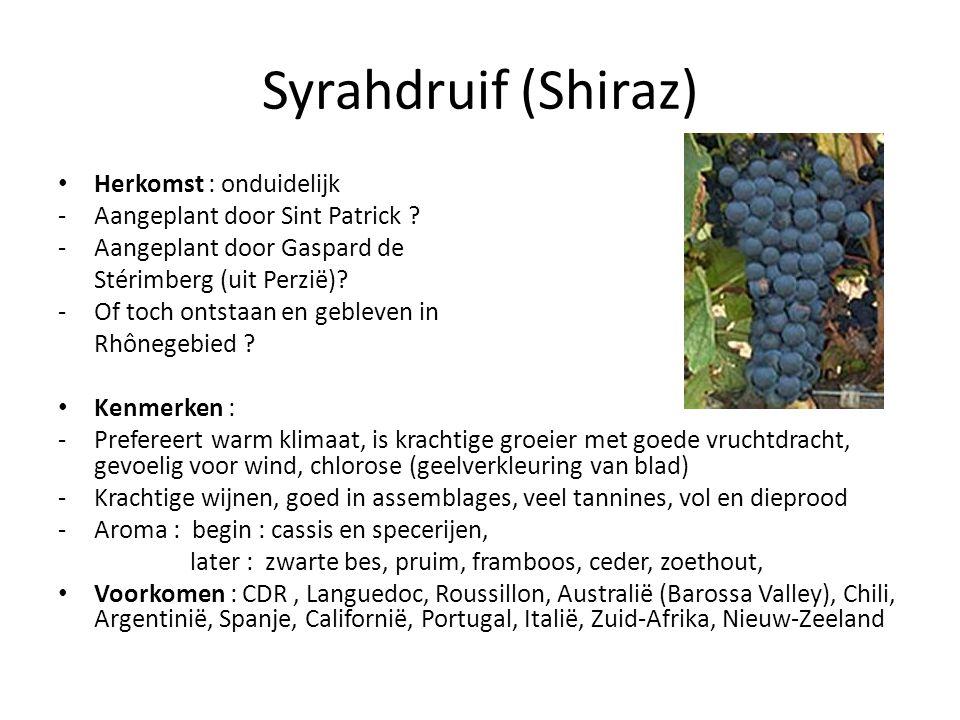 Syrahdruif (Shiraz) Herkomst : onduidelijk