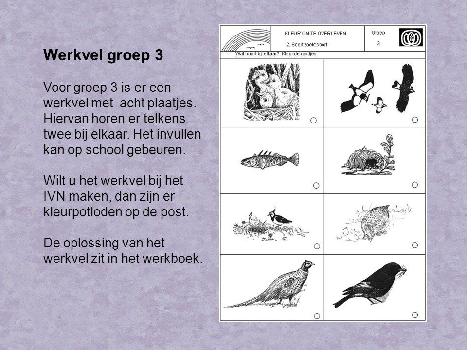 Werkvel groep 3 Voor groep 3 is er een werkvel met acht plaatjes. Hiervan horen er telkens twee bij elkaar. Het invullen kan op school gebeuren.