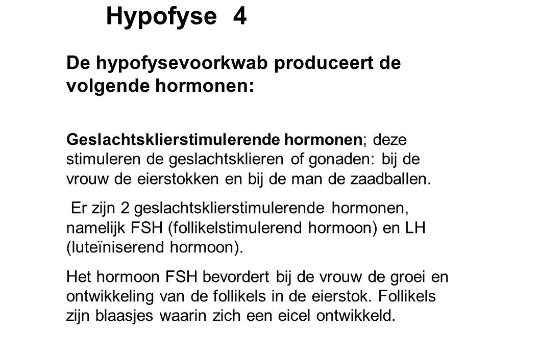 Hypofyse 4 De hypofysevoorkwab produceert de volgende hormonen: