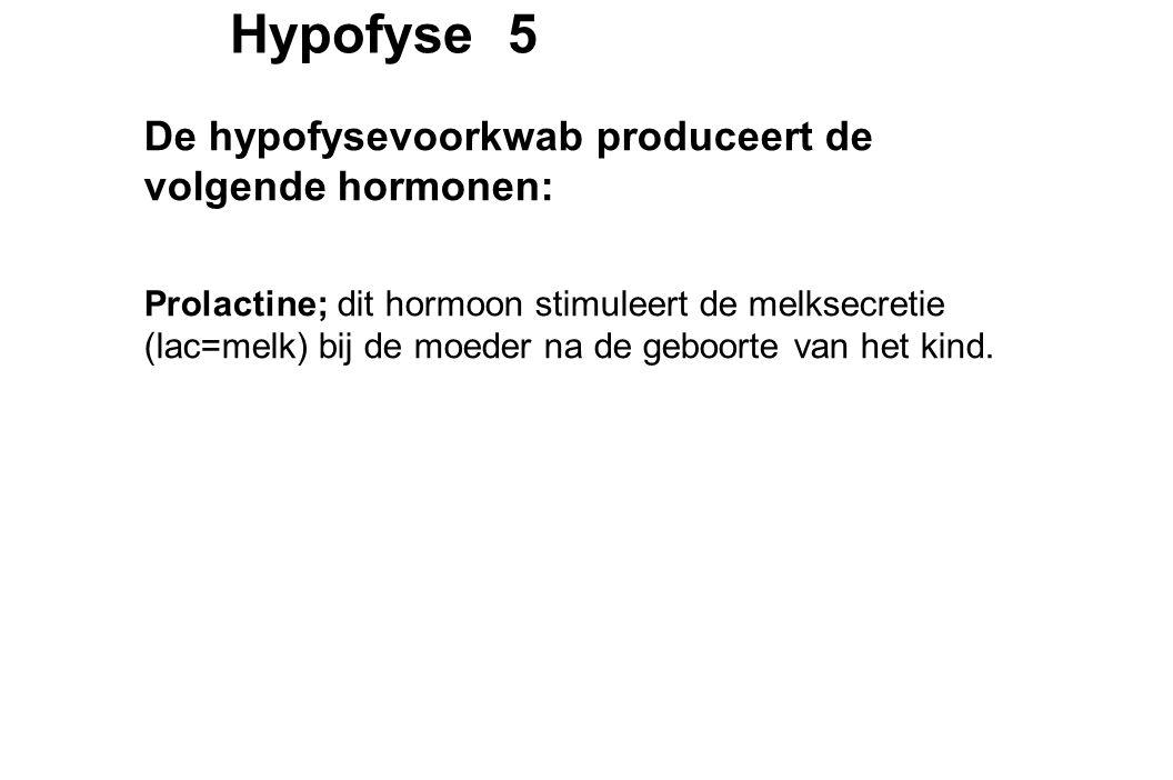 Hypofyse 5 De hypofysevoorkwab produceert de volgende hormonen: