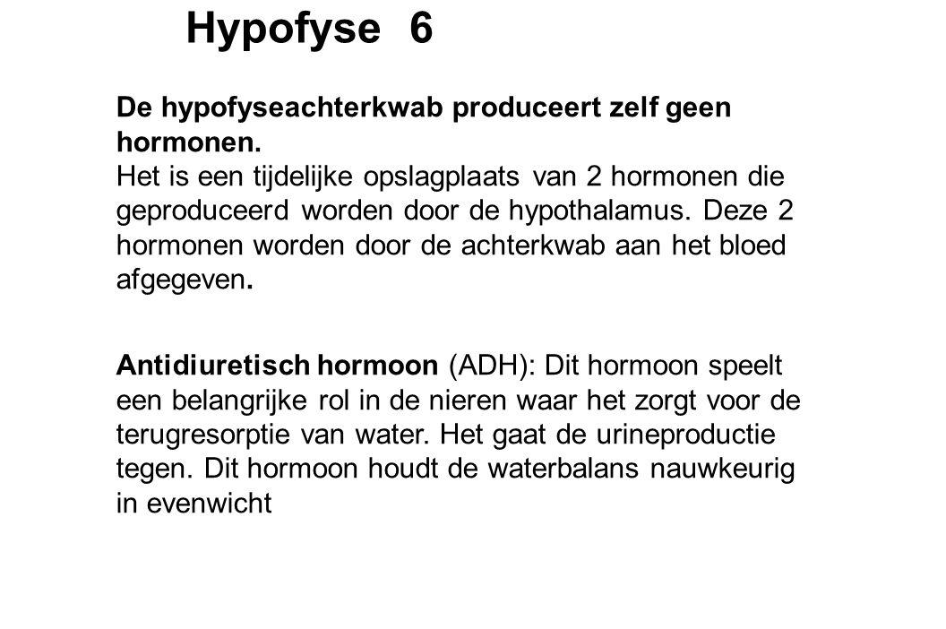 Hypofyse 6