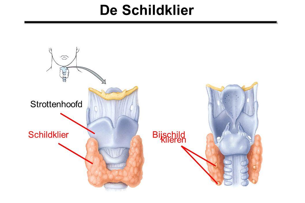 De Schildklier Strottenhoofd Schildklier Bijschild klieren