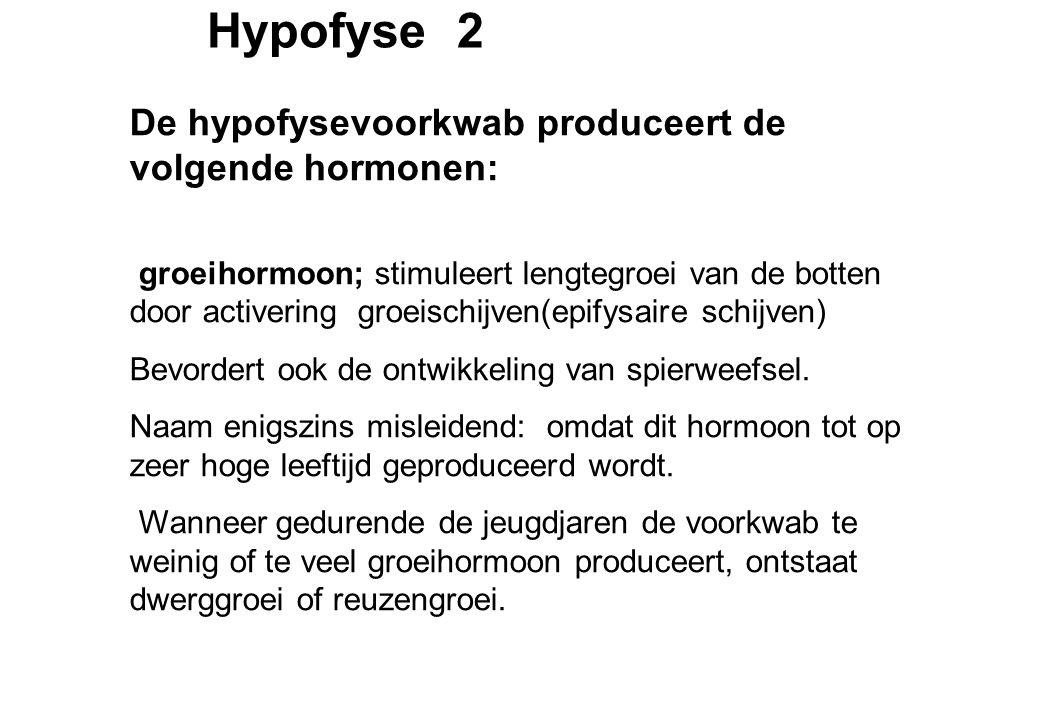 Hypofyse 2 De hypofysevoorkwab produceert de volgende hormonen: