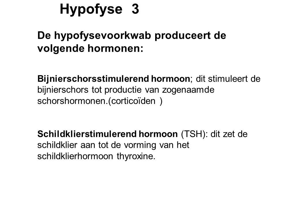 Hypofyse 3 De hypofysevoorkwab produceert de volgende hormonen: