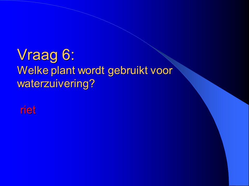 Vraag 6: Welke plant wordt gebruikt voor waterzuivering riet