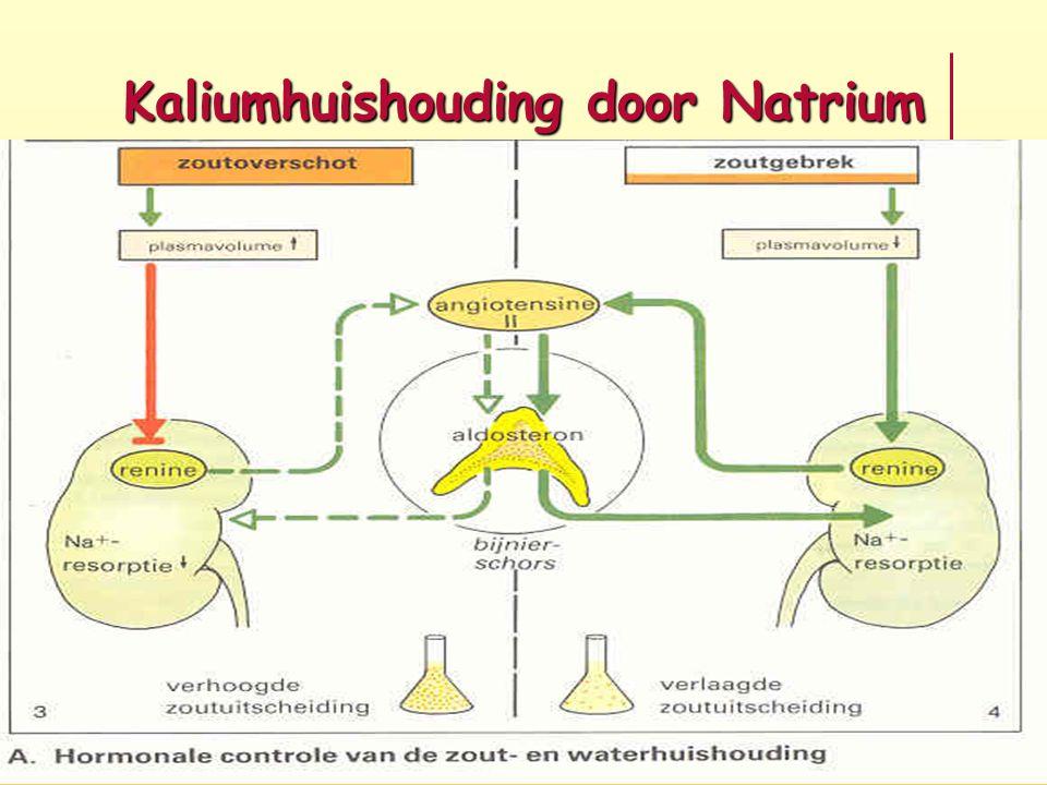 Kaliumhuishouding door Natrium