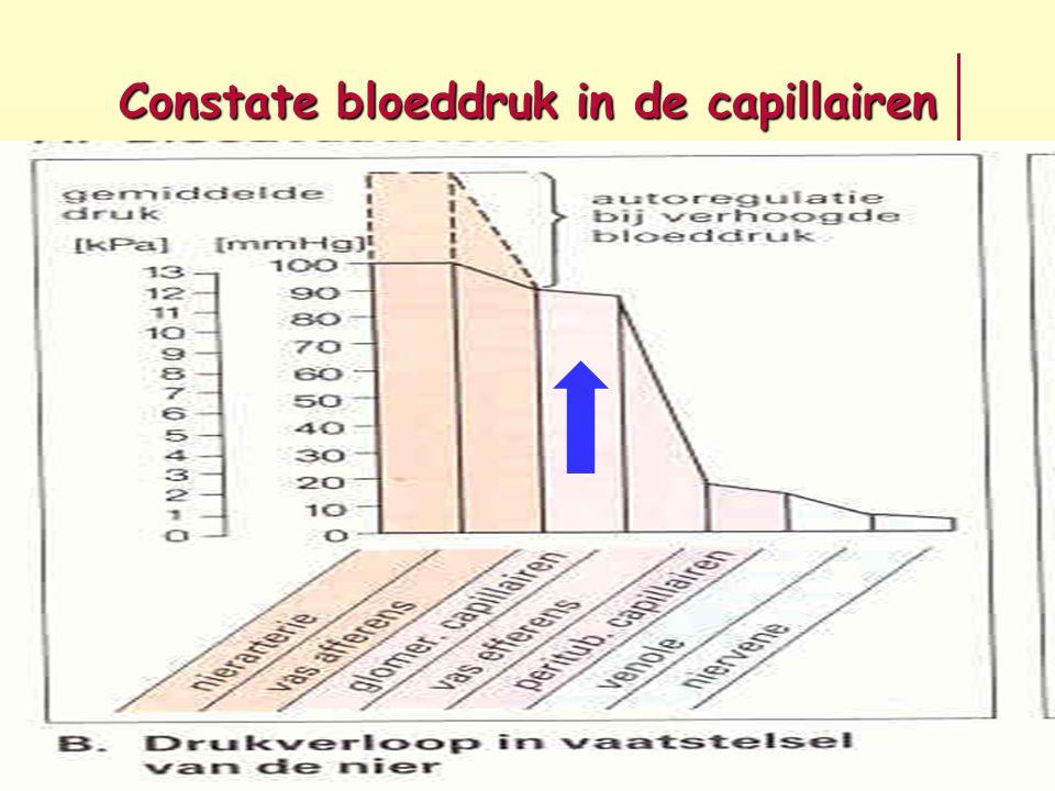 Constate bloeddruk in de capillairen