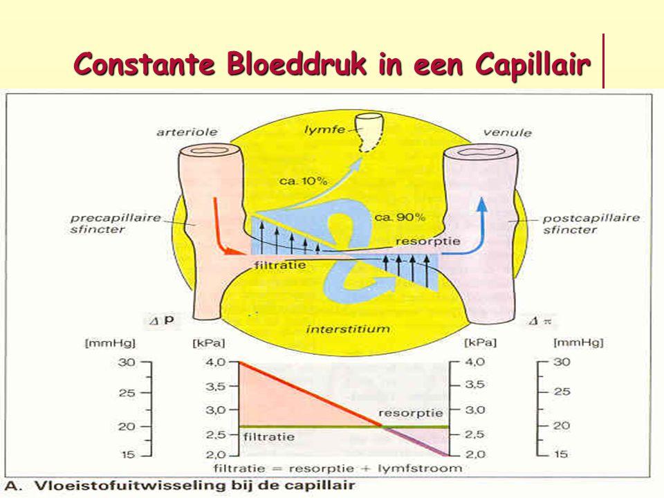 Constante Bloeddruk in een Capillair