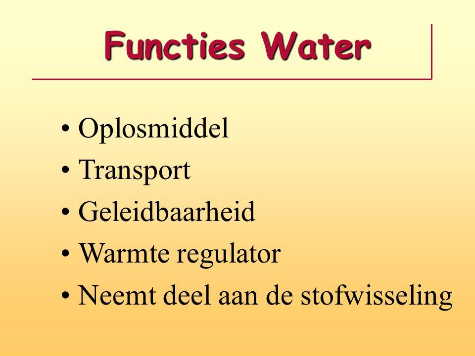 Functies Water Oplosmiddel Transport Geleidbaarheid Warmte regulator