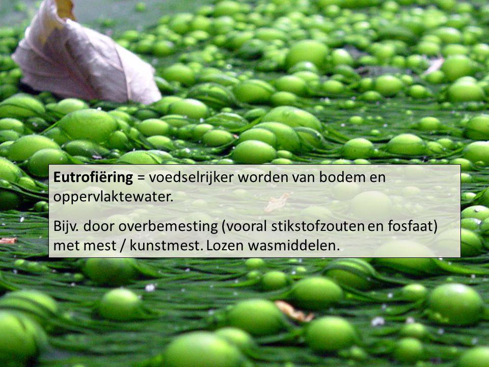 Eutrofiëring = voedselrijker worden van bodem en oppervlaktewater.