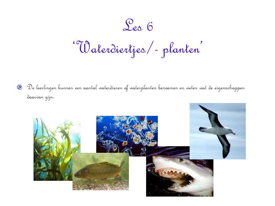 Les 6 'Waterdiertjes/- planten'