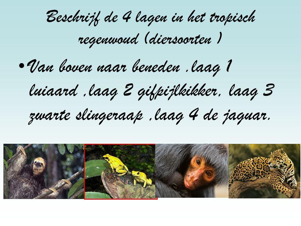 Beschrijf de 4 lagen in het tropisch regenwoud (diersoorten )