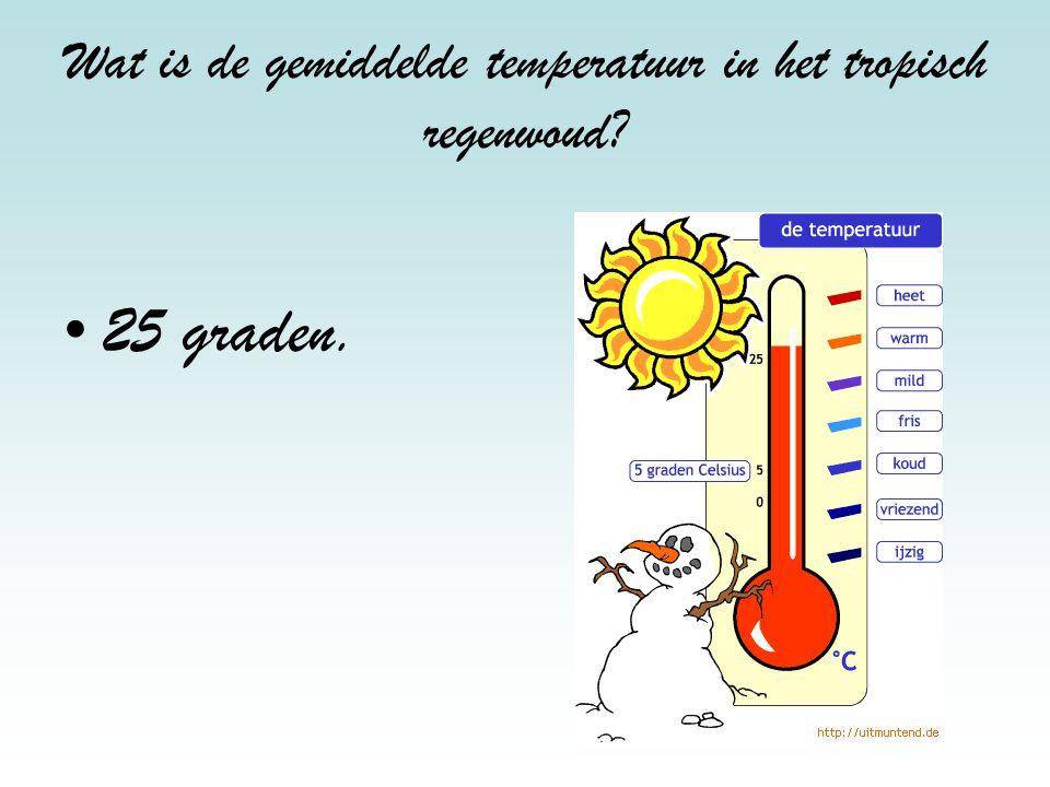 Wat is de gemiddelde temperatuur in het tropisch regenwoud