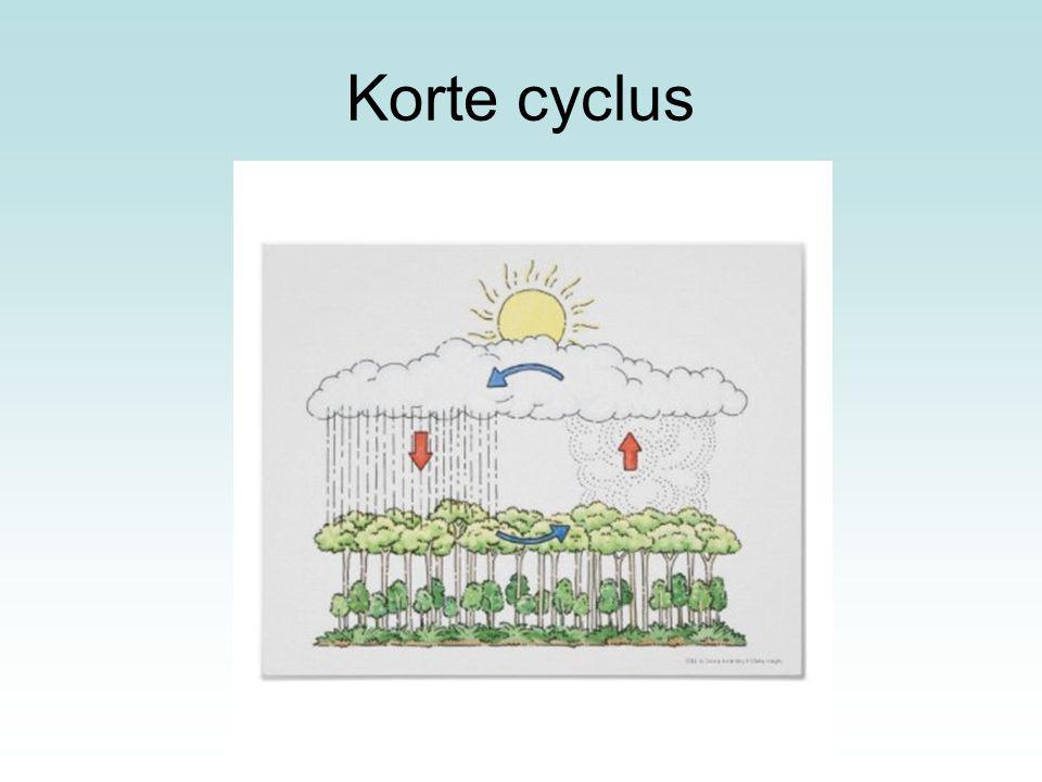 Korte cyclus