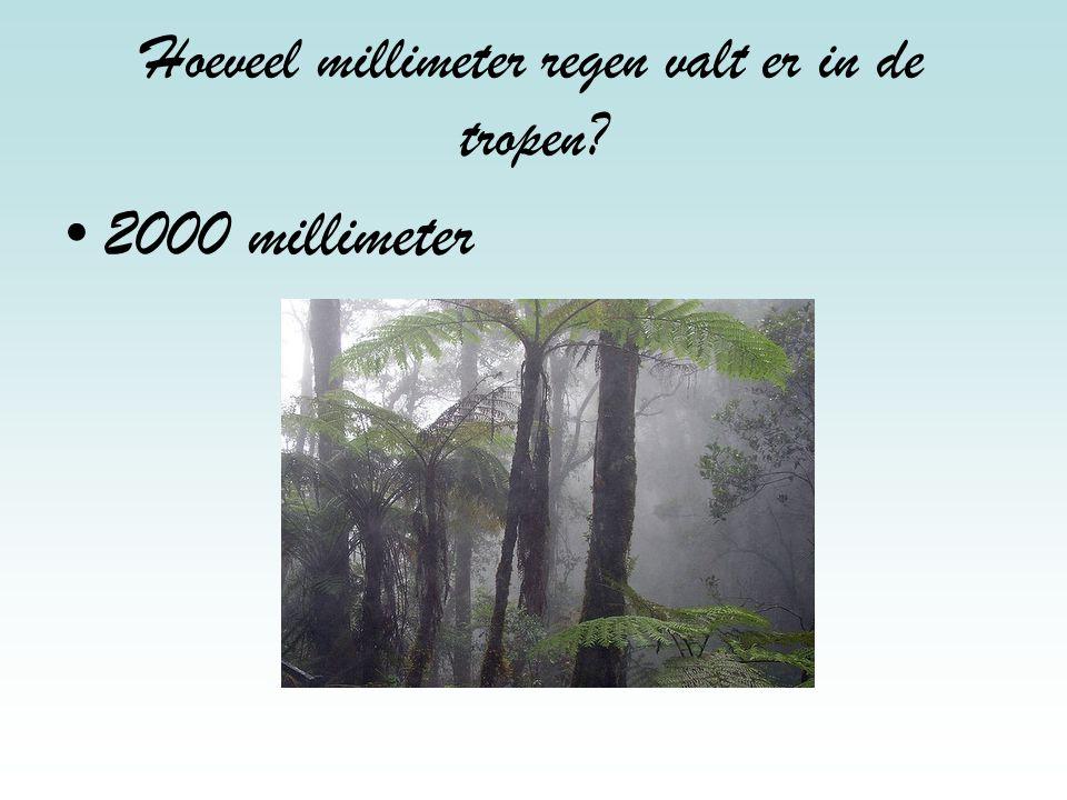 Hoeveel millimeter regen valt er in de tropen