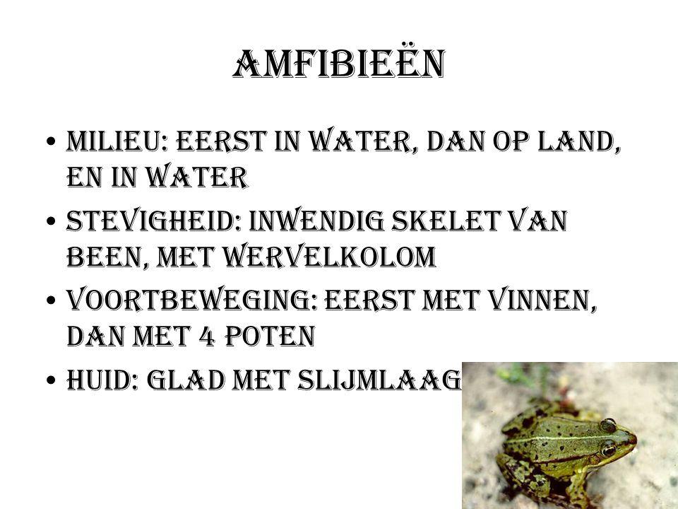 Amfibieën Milieu: Eerst in water, dan op land, en in water
