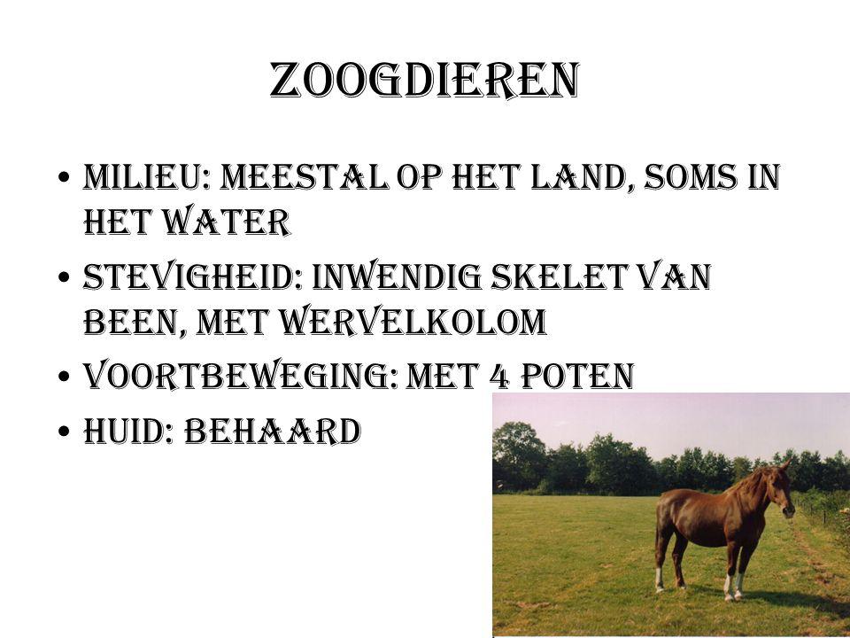 Zoogdieren Milieu: meestal op het land, soms in het water