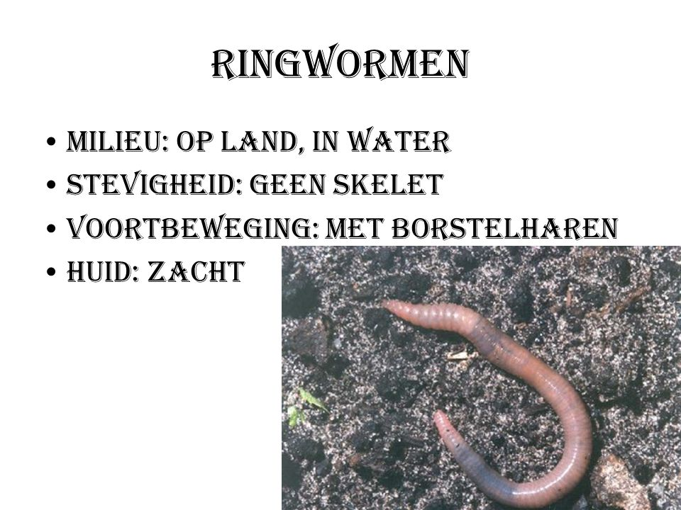 Ringwormen Milieu: Op land, in water Stevigheid: Geen skelet