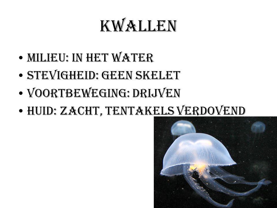 Kwallen Milieu: In het water Stevigheid: Geen skelet