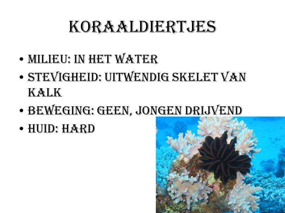 Koraaldiertjes Milieu: In het water