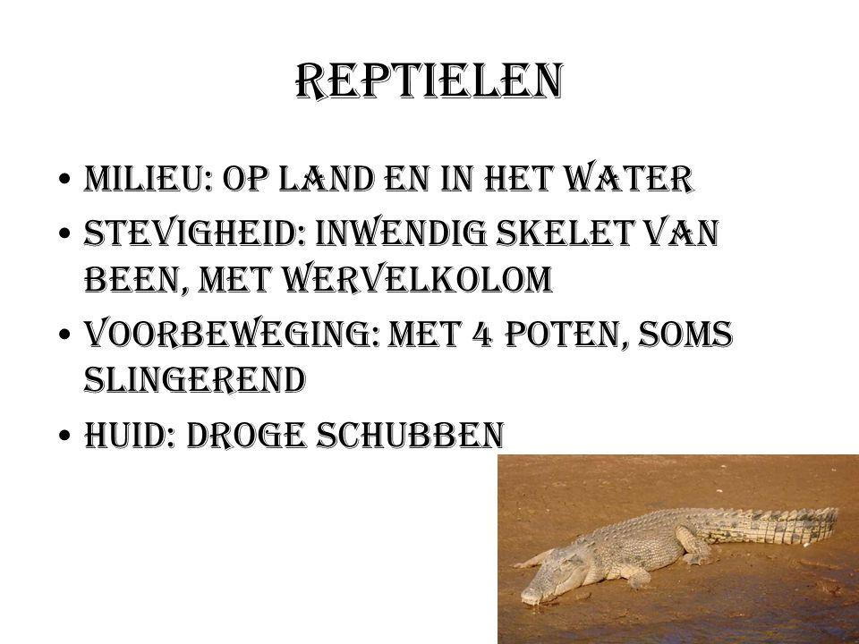 Reptielen Milieu: Op land en in het water