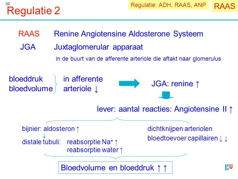 Regulatie 2 RAAS RAAS Renine Angiotensine Aldosterone Systeem JGA