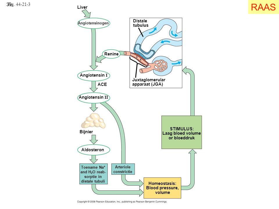 RAAS Fig. 44-21-3 Liver Distale tubulus Renine Angiotensin I