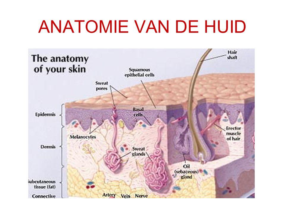 ANATOMIE VAN DE HUID