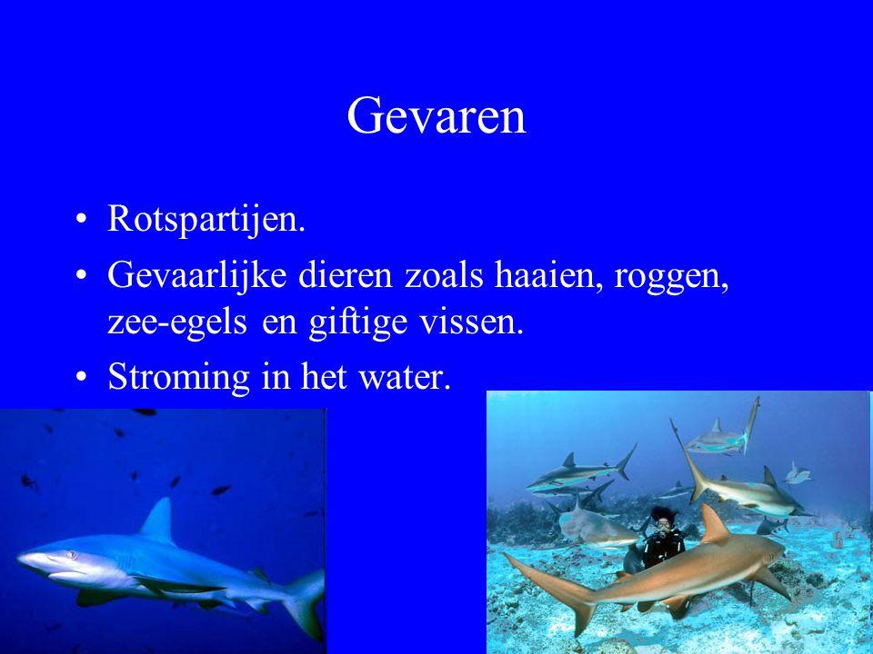 Gevaren Rotspartijen. Gevaarlijke dieren zoals haaien, roggen, zee-egels en giftige vissen.