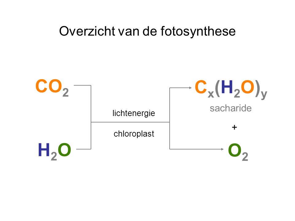 Overzicht van de fotosynthese