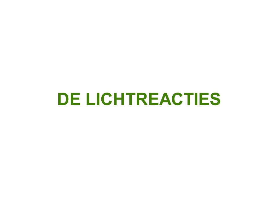 DE LICHTREACTIES