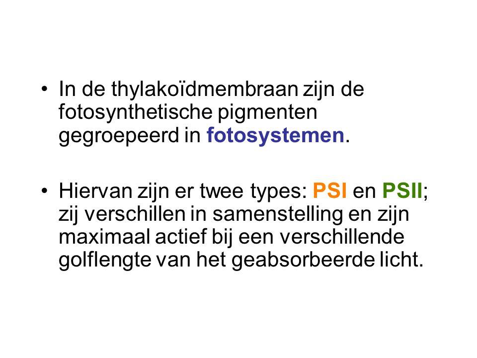 In de thylakoïdmembraan zijn de fotosynthetische pigmenten gegroepeerd in fotosystemen.