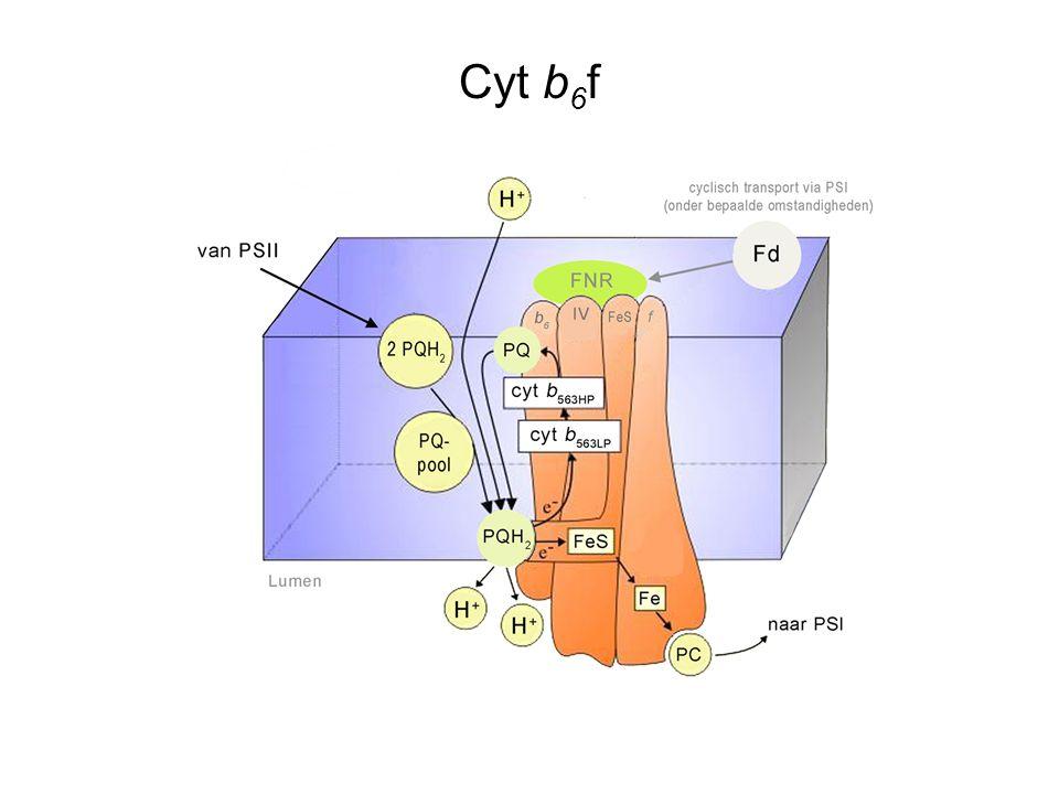 Cyt b6f