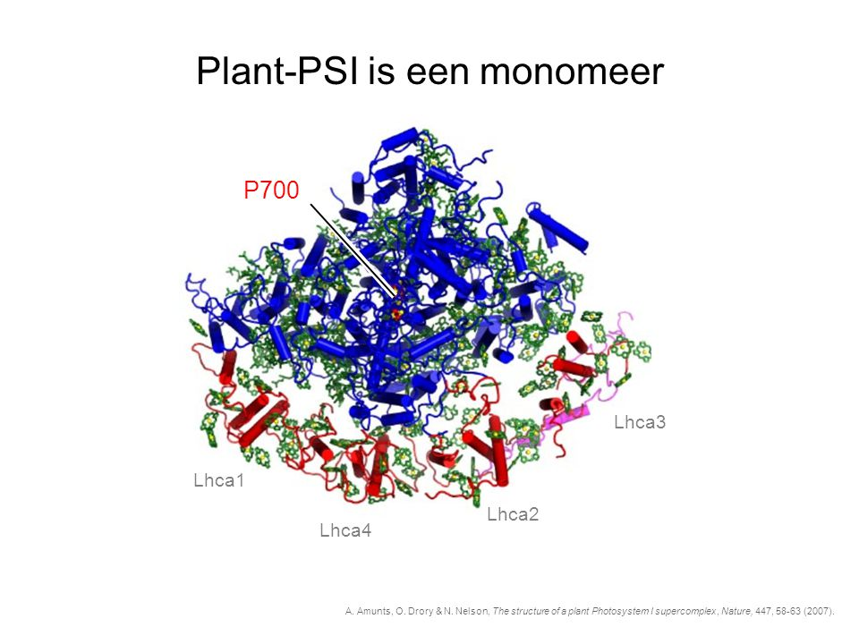 Plant-PSI is een monomeer