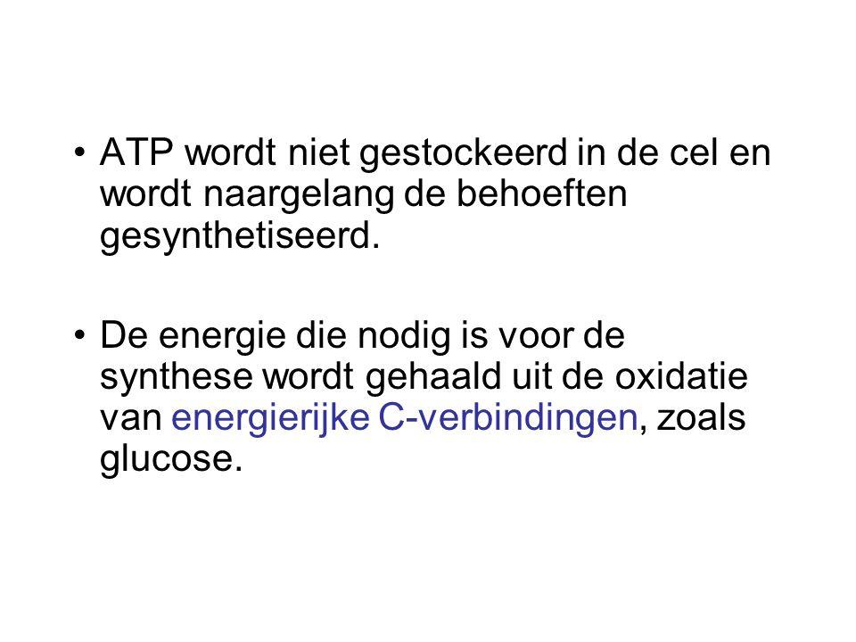 ATP wordt niet gestockeerd in de cel en wordt naargelang de behoeften gesynthetiseerd.